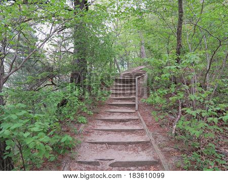 Eroded walkway with spring time tree growth at Starved Rock State Park.