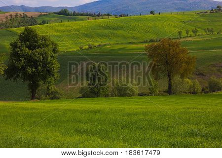 Typical umbria landscape in the spring season