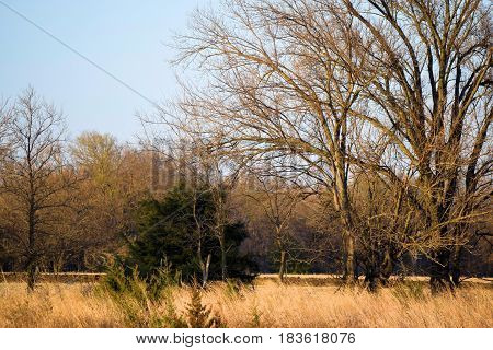 North American deciduous forest taken in the rural countryside during winter