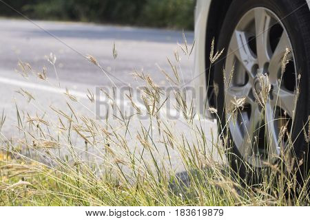 background nature little grass flower beside road have a car stop