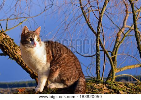 Cat sitting on a branch in beautiful light. Horizontal image.