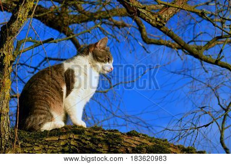 Domestic cat sitting on a branch. Horizontal image.