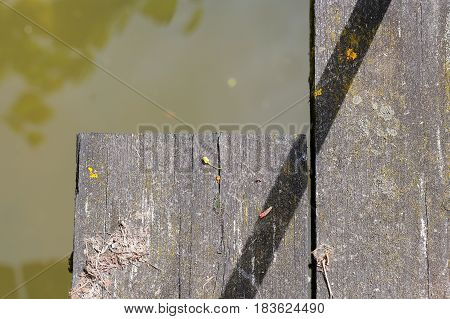 Old wooden bridge foot plank covered in lichen and moss and green water background