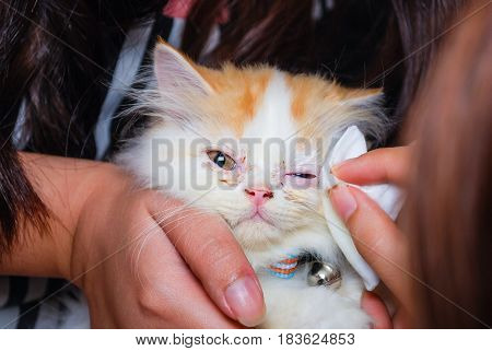Young Persian Cat Is Getting Its Eye Wiped