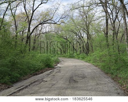 Service or Maintenance Road Bordering St. Louis Canyon at Starved Rock State Park in spring