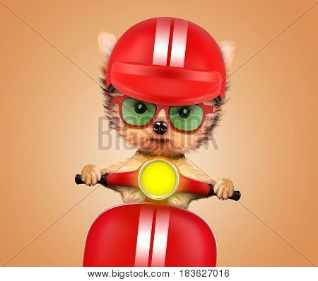 Funny adorable puppy sitting on a red motorbike and wearing helmet, isolated on color background. Delivery concept. Realistic 3D illustration with clipping path