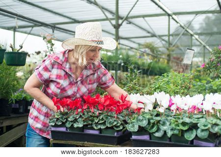 Good looking woman choosing plants and flowers at nursery for her backyard or patio, looking picky and thoroughly.