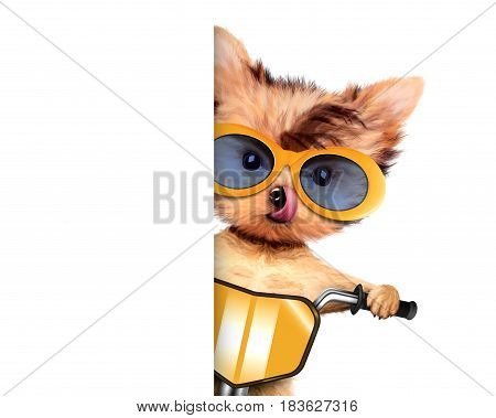 Funny adorable puppy sitting on a bike with yellow sunglasses, isolated on white. Delivery concept. Realistic 3D illustration with clipping path