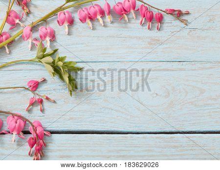 Bleeding heart flowers on old wooden background