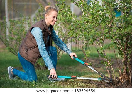 woman gardener working with hedge shear in the yard. Professional garden worker trimming branches. Gardening service and business concept poster