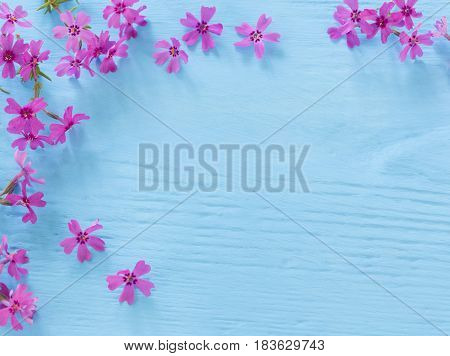 the pink flowers on a blue wooden background
