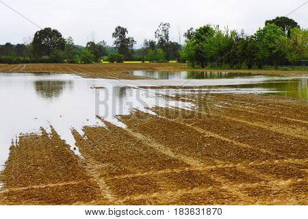 Flooded fields after torrential rain - Image with copy space