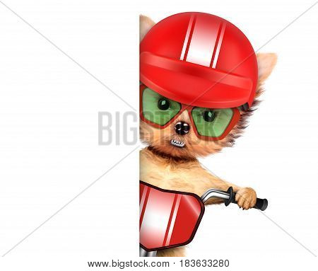 Funny racer dog sitting on a red bike, helmet and wearing sunglasses. Sport and championship concept. Realistic 3D illustration with clipping path