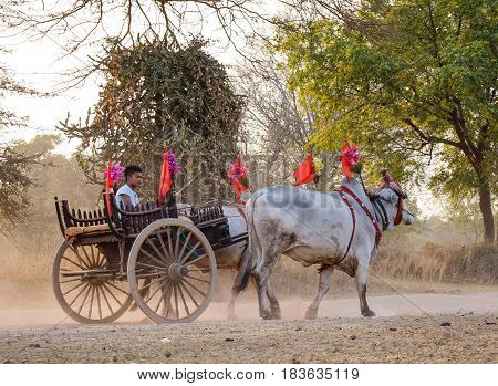Ox Cart Carrying Tourists On Dusty Road