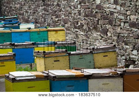 rows of colored beehives in a green garden near a stone wall springtime selective focus