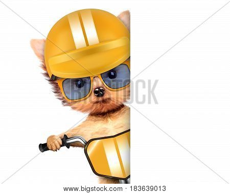 Funny racer dog sitting on a yellow bike, helmet and wearing sunglasses. Sport and championship concept. Realistic 3D illustration with clipping path