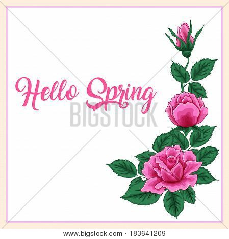 Light Pink Rose Flower. Text Hello Spring. Light Pink Rose Flower isolated on white background. Postcard or resource for your banner