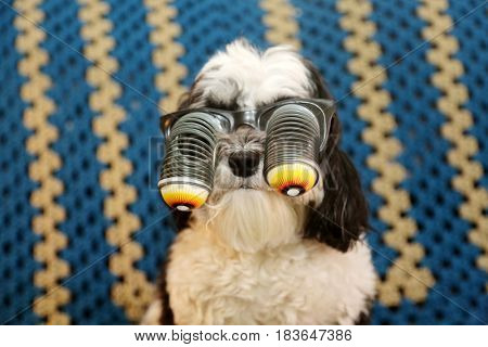 A Havanese dog wears googly eye glasses as a gag or Halloween costume