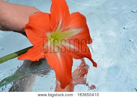Beautiful flowers in hand reflected in pure water, natural background