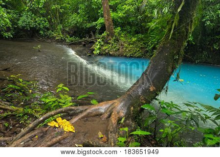 Two clear rivers with different acidity mix and create the river with turquoise water. Rio Celeste, Costa Rica