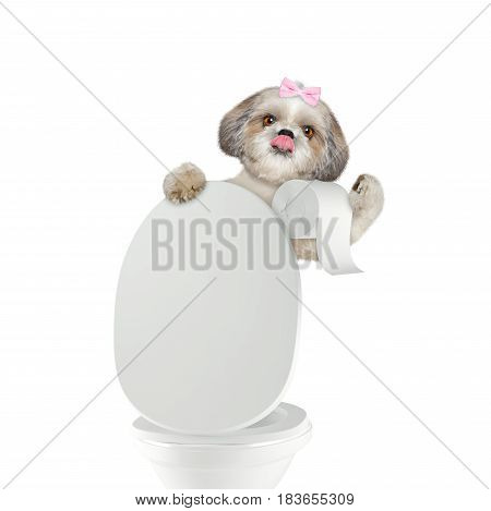 Cute dog pooping into toilet bowl -- isolated on white