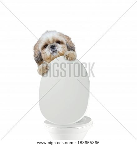 Cute dog pooping into toilet -- isolated on white
