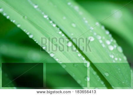 blurred water drops on green grass macro can be background