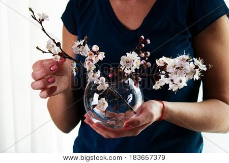 Women's hands holding glass vase with spring flower bouquet. Spring flowers blossom of an aipricot tree in the hands of a woman. Woman's hands hold spring flowers.