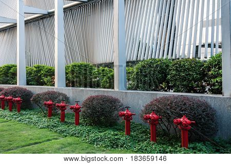 row of Red Fire Hydrants on grass.