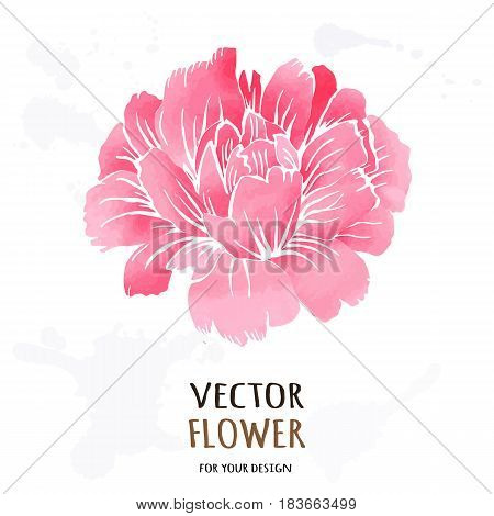 Hand drawn vector realistic illustration of dahlia flower isolated on white background.
