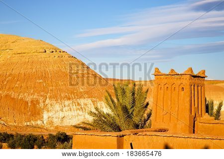 Africa In Morocco The Old Contruction Tree