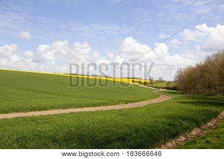 Wheat Fields And Woodland