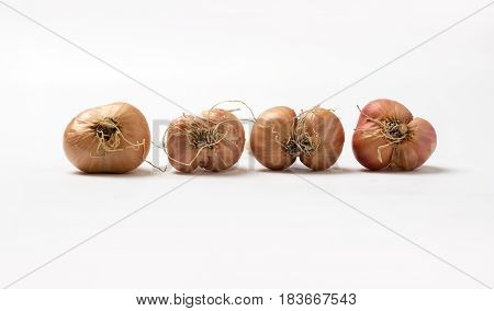 Organic Thai Shallots Isolated On A White Background.