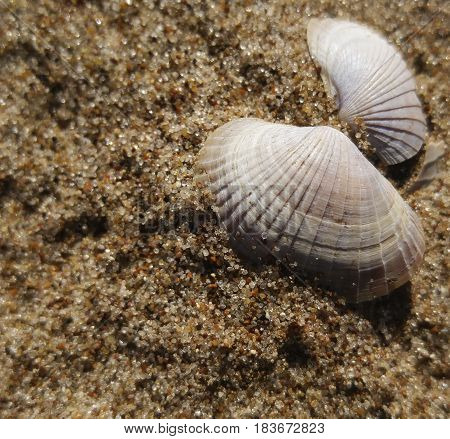 Background of river sand with beautiful seashell. Close-up. Nature.