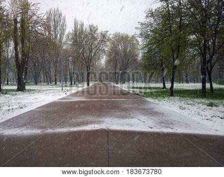 The snowfall in April 2017 in the city of Krivoi Rog in Ukraine