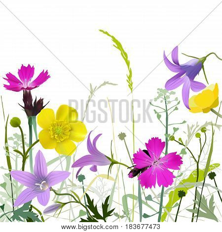 Meadowflowers-w