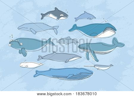 Different whale set. Hand drawn doodle illustration collection