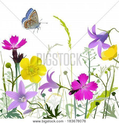 Meadowflowers-wb