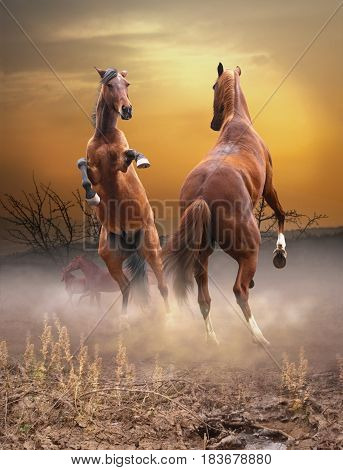 Two horses fight for the title of chief in the herd