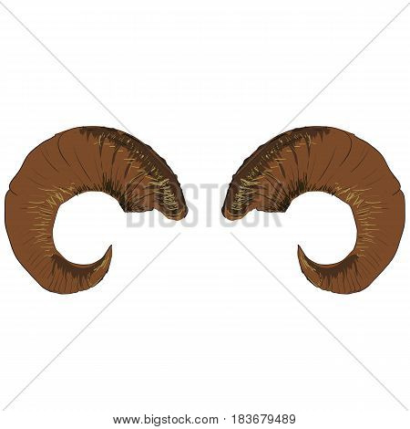 Animal Ram of Goat Horns Isolated on White Background