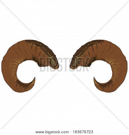 Vector Animal Ram of Goat Horns Isolated on White Background
