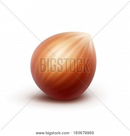 Vector Full Unpeeled Realistic Hazelnut Close up Isolated on White Background