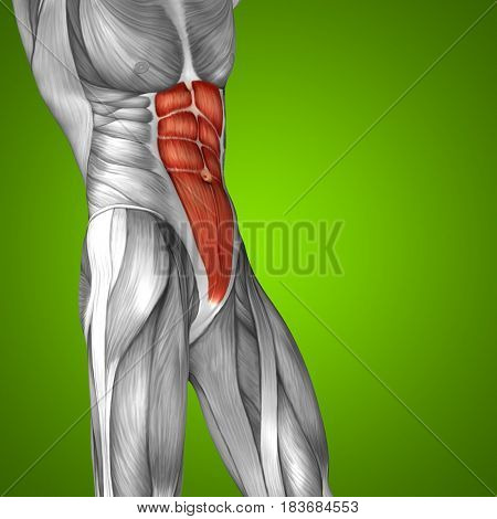 Concept or conceptual 3D illustration chest human anatomy or anatomical and muscle on green background