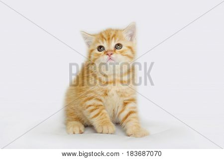 Charming yellow gentle kitten. Striped baby cat isolated on white.