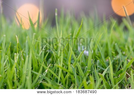 Close-up macro detail of thin blades of grass on a lawn background blurred out. Nature and outdoors concept.