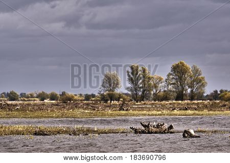 The trunk of a dead tree at a floodplain at the mouth of the River Warta in Poland