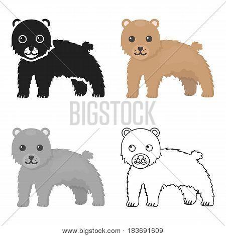 Bear icon cartoon. Singe animal icon from the big animals cartoon.