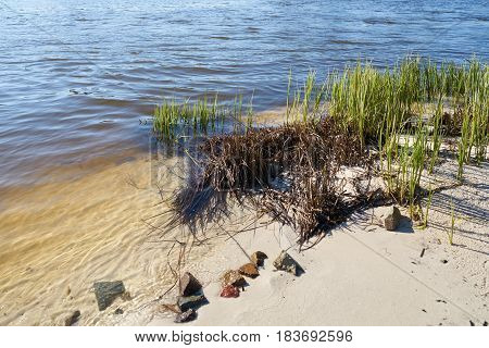 On the banks of the river Elbe near Magdeburg