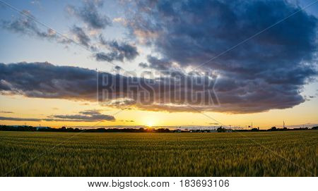Yellow Rice Field During Sunset and Clouds