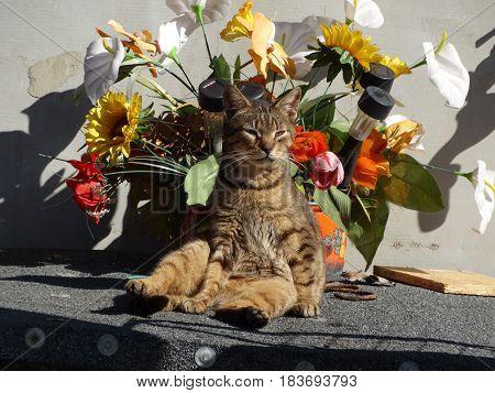 Wiejski kocur wygrzewa się na wiosennym słońcu